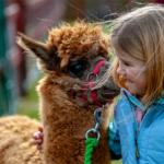 Qué hacer en Cusco si se viaja con niños